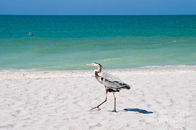 Florida Sanibel Island Summer Vacation Beach Wildlife Print by ELITE IMAGE photography By Chad McDermott