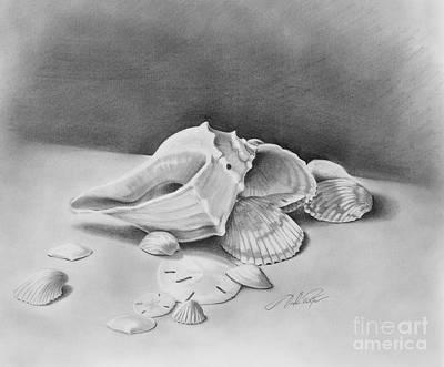 Drawing - Florida Shell Study by Joseph Palotas