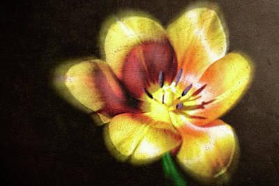 Flower-4 Print by Okan YILMAZ
