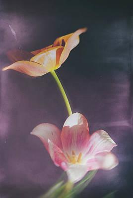 Flower-5 Print by Okan YILMAZ