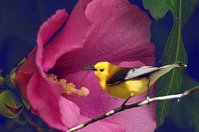 Warbler Digital Art - Flower And The Bird by Richard Smith