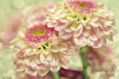 Flower D3 Print by SK Pfphotography
