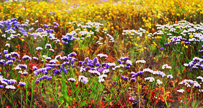 Lavender Drawing - Flower Fields by Glenn McCarthy Art and Photography