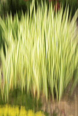 Photograph - Flower Garden Abstract 2016-1 by Thomas Young