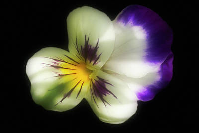 Photograph - Flower In Colour by Cliff  Norton