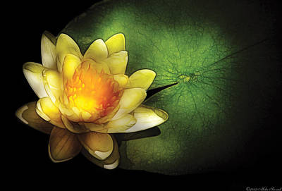 Flower - Lotus - Nymphaea  Chromatella - Yellow Lily Print by Mike Savad