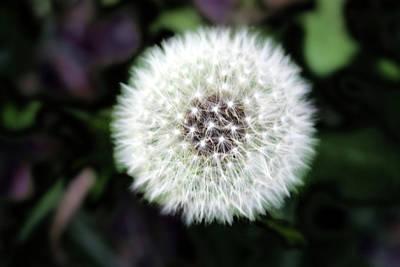 Art In Nature Digital Art - Flower Of Flash by Mark Ashkenazi