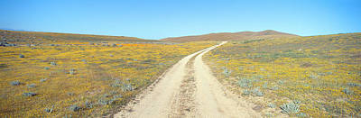 Backroad Photograph - Flowers & Poppies, Antelope Valley by Panoramic Images