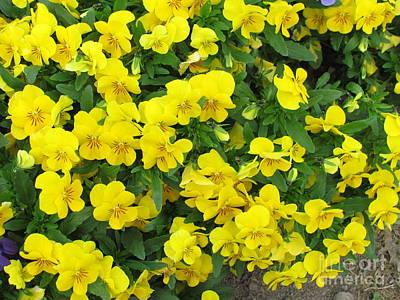 Flowers Beds  Print by Joyce Woodhouse