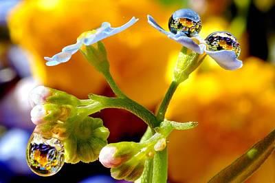 Flowers In Drops Original by Yuri Hope