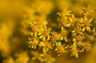 Flowers In Eastern Montana Print by Joel Sartore