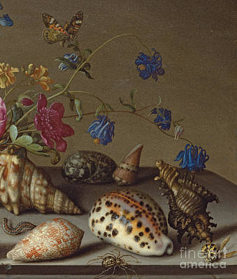 Flowers, Shells And Insects On A Stone Ledge Print by Balthasar van der Ast