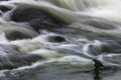 Dipper Photograph - Flowing Contemplation by Arne ?stlund