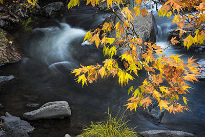 Leaves Photograph - Flowing Oak Creek Canyon Under Colorful Leaves by Dave Dilli