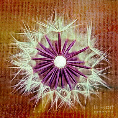 Dandelion Digital Art - Fluffy Sun - S20b-t01sq by Variance Collections