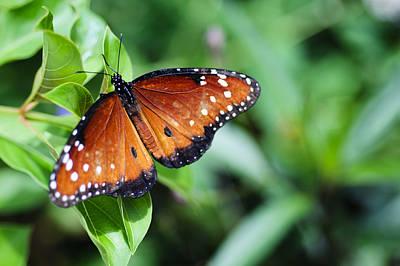 Pause Photograph - Flutter By by Christi Kraft