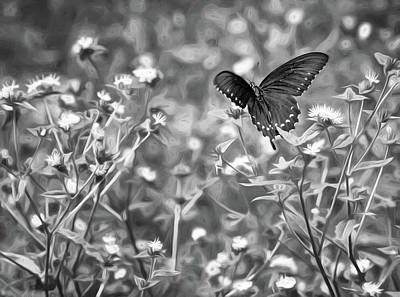 Flutter Photograph - Fluttering Swallowtail Bw by Steve Harrington
