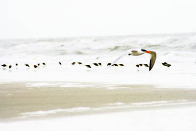 Beach Theme Decorating Photograph - Tern In Flight by Angela Rath