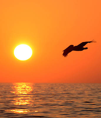 Lone Pelican Photograph - Flying Over Florida by David Lee Thompson