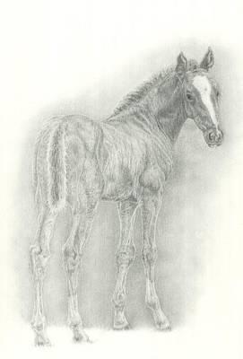 Foal Print by Jennifer Nilsson