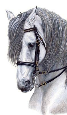 Horses Drawing - Focus by Kristen Wesch