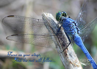 Dragonflies Photograph - Focus On Your Wings by Carol Groenen