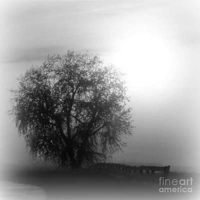 Fog Tree Print by Barbara Henry