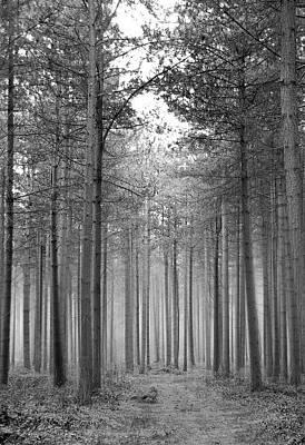 Foggy Forest Print by Svetlana Sewell