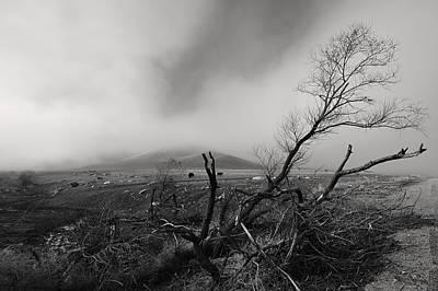 Foggy Grapevine Print by Richard Leon