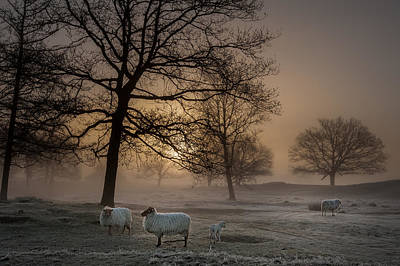 Sheep Photograph - Foggy Morning by Piet Haaksma