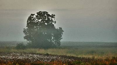 Watermelon Digital Art - Foggy Tree In The Field by Michael Thomas