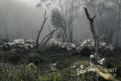 Hollow Photograph - Fogscape by Andrew Paranavitana