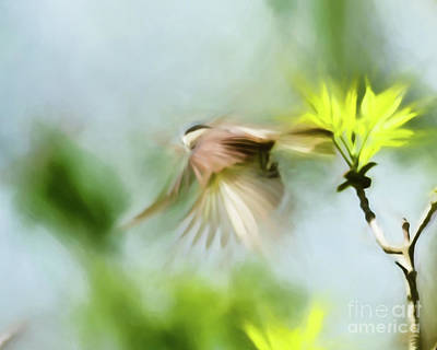 Chickadee Photograph - Follow Your Dreams by Kerri Farley