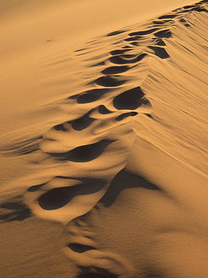 Footprints Along Top Of Sand Dune, Erg Print by Panoramic Images