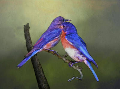 For Love Of Bluebirds Print by Sandi OReilly