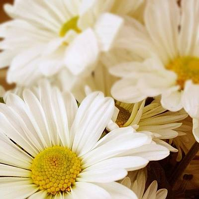 Daisies Photograph - For You. #flowers #daisies by Invisible Cirkus