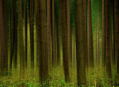 Forest Abstract01 Print by Svetlana Sewell