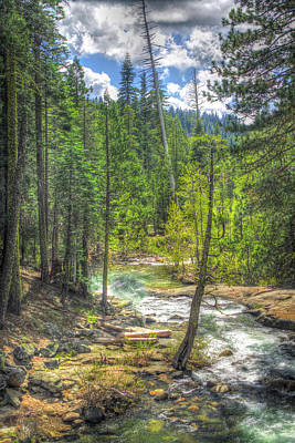 Hdr Photograph - Forest At Cosumnes River Middle Fork  by SC Heffner