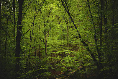 Virginia Photograph - Forest Beckons by Shane Holsclaw