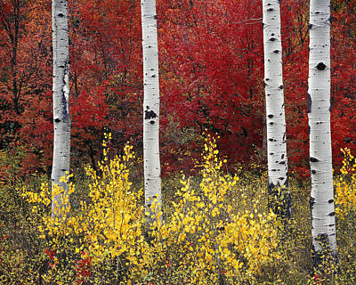 Forest Color Print by Leland D Howard