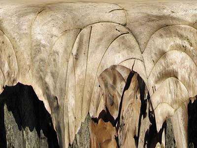 Forest Floor Print by Tim Allen