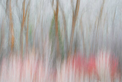 Impressionistic Landscape Photograph - Forest Impression 2 by Leland D Howard
