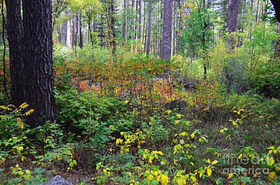 Forest In Autumn Print by Debby Pueschel