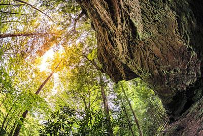 Kentucky Photograph - Forest In Kentucky by Alexey Stiop