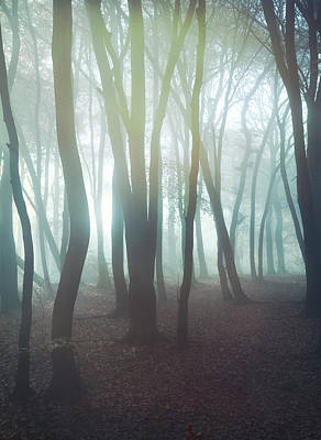 Forest Print by Mark Owen
