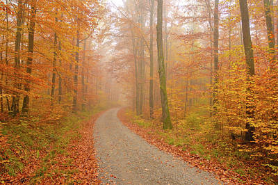 Forest Path In Fall Print by Matthias Hauser