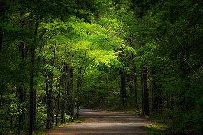 Pass Photograph - Forest Path by Parker Cunningham