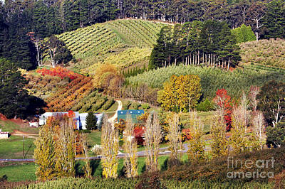 Vines Photograph - Forest Range, Adelaide Hills by Bill  Robinson