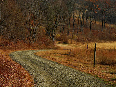 Forest Road Off At In Pa Print by Raymond Salani III