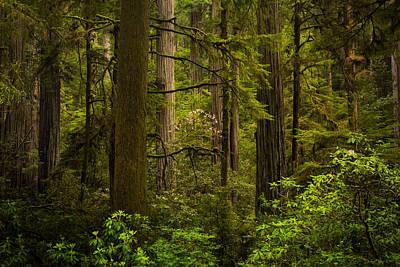 California Redwood Photograph - Forest Serenity by Thorsten Scheuermann